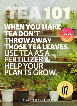 Tea Tip 07