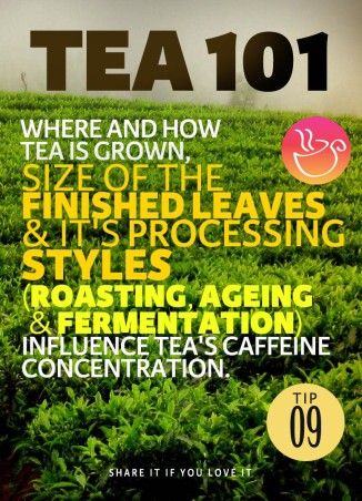 tea-tip-09